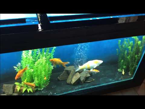 Aquarium - Wood & Epoxy & Glass - DIY HomeMade