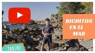 Plancton: bichitos en el mar | Experimenta