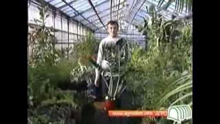 Щитовка  Борьба с щитовкой на комнатных растениях(, 2012-11-11T09:38:17.000Z)