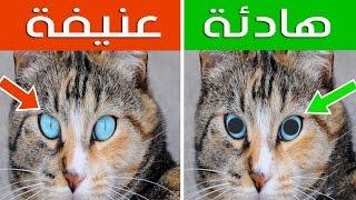 16 علامة خفية عن القطط | كيف تفهم لغة القطط ؟؟