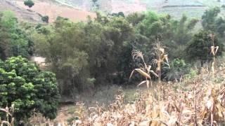 Agroforestry for better livelihoods of upland farmers in Northwest Vietnam