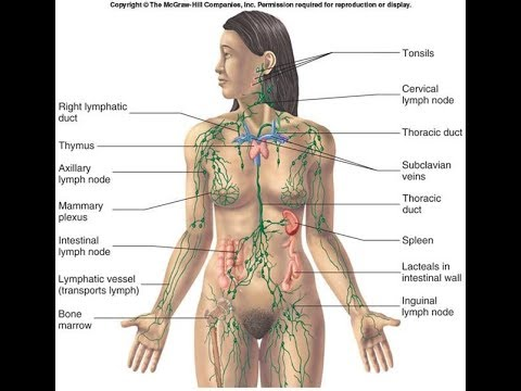 Human Lymphatic System : Best Documentary