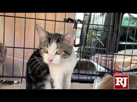 NSPCA Gets Kittens From LA