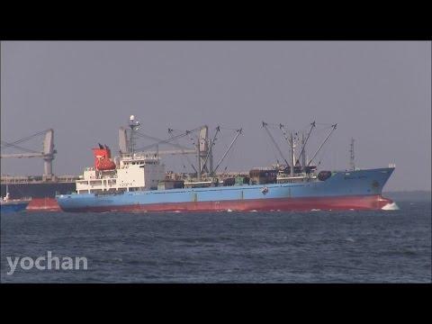 Reefer Ship: SHOTA MARU (Toei Reefer Line Ltd. IMO: 9194892)