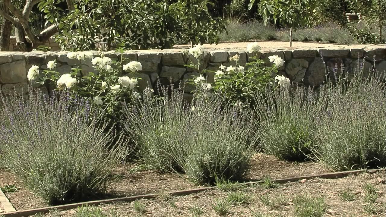 Mediterranean Garden Ideas Youtube