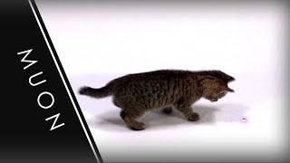Muon the Kitten  Investigates a 405nm Laser