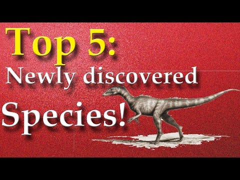 Top 5: Newly discovered species!