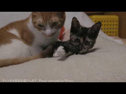 2017.10.15 昼 猫部屋ライブ映像   Cats & Kittens room 【Miaou みゃう】