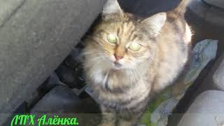 Вот дела ! Кошка родила одного котёнка ! / В машине ! / 30.08.2017