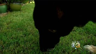 Health Watch: Dogs Training To Detect Cancer