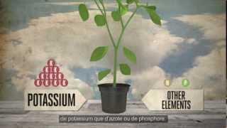 Potassium pour les nourriture des plantes - EP3 S2 avec CANNA