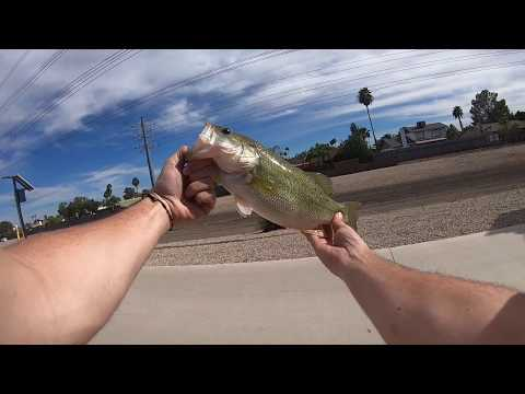 AMAZING Fishing In 3ft Of Water