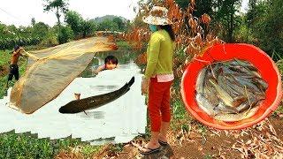 Vô Tình Phát Hiện Cảnh Bắt Toàn Cá Khủng Dính Đầy Lưới Bẫy Cá .Catching Fish By Using The Net