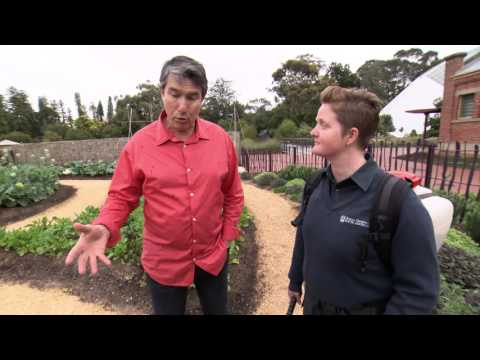 In The Garden - Little Sprouts Kitchen Garden - Adelaide Botanic Garden