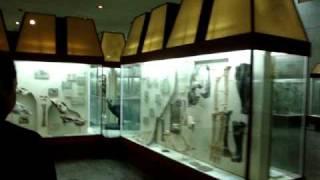 видео Музей коневодства и Биологический музей. Тимирязевская и М. Грузинская улицы не оставят вас равнодушными