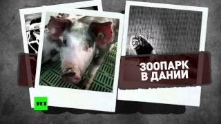 В Европе учащаются случаи жестокого обращения с животными