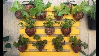 Horta Vertical Sustentável e Ecológica com as Cascas do Coco Verde