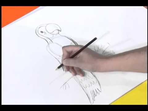Desenhando Uma Arara Youtube