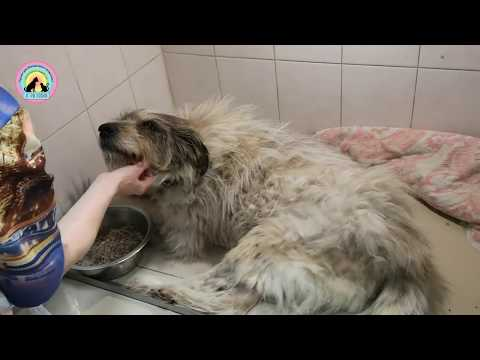 Двадцать переломов после которых пес Тим выжил animal shelter saved the dog