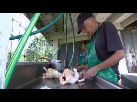 Kingbird Farm Chicken Proces..