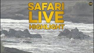 Minute of Mara Madness- Croc & Lions Attack Zebras