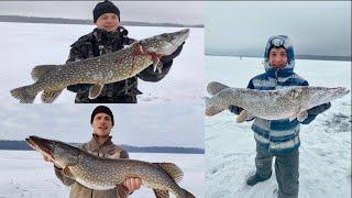 Большие щуки Ленинградской области 2021 Рыбалка на жерлицы