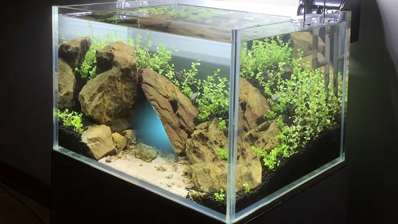 Hướng Dẫn Setup Bể Thủy Sinh Trân Châu Ngọc Trai Bố Cục Hang Động – Nano Aquarium Setup Step by Step