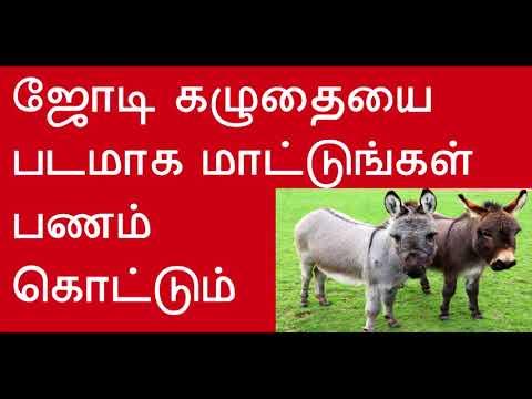 ஜோடி கழுதையை படமாக மாட்டுங்கள் பணம் கொட்டும் Hang the pair donkey photo for earn more money