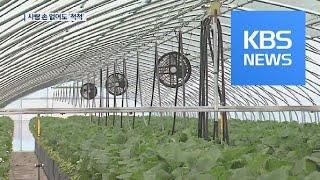 시설농가도 4차 산업혁명…'스마트팜' 각광 / KBS뉴…