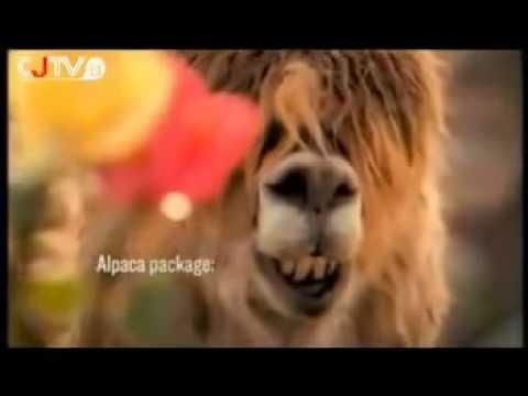 草泥馬之歌 - YouTube