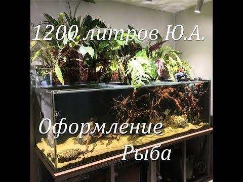 Аквариумпермь.рф - №2 Аквариум для Южной Америки на 1200л с фитофифильтром(Оформление,рыба)