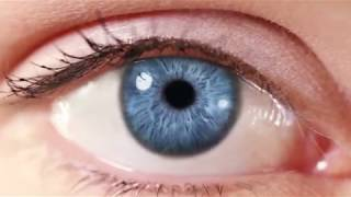 Be Grateful for the Intelligent Design of Your Eyes