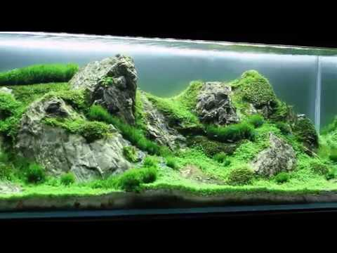 Marvelous Giuseppe Landieri Aquascaper   Green Rocky Mountains   Layout 2016