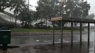 山竹9号風球青衣風勢