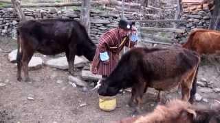 "Bhutan  Village "" Ura""  Bhumtang"