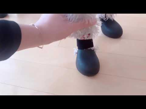 [Bedlington Terrier] funny video 🤣 first time wear boots