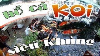Koi fish - Đi uống Cafe cá Koi - Hồ cá Koi siêu khủng