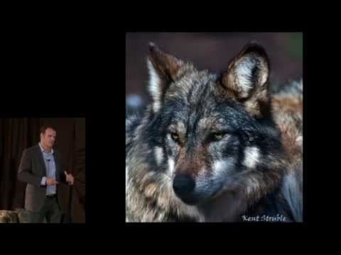 In the presence of wolves: Patrick Valentino at TEDxConstitutionDrive