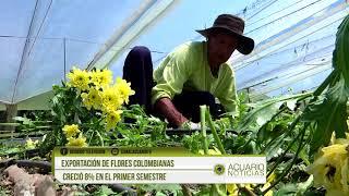 Exportación de flores colombianas creció 8% en el primer semestre
