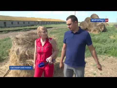 Волгоградский фермер планирует производство мраморного мяса