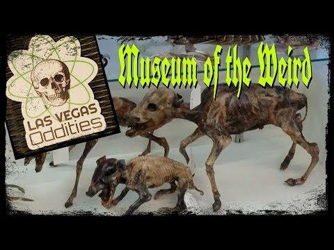 Las Vegas Oddities - The Weirdest Shop in Las Vegas