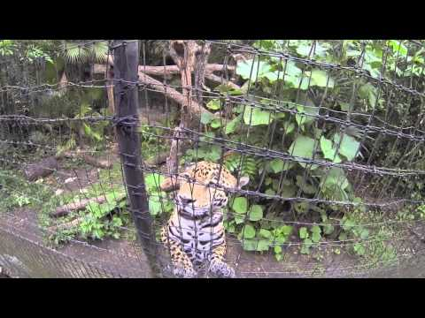 Loving Belize Episode 5 - Tourist Advice, Belize Zoo, Marine reserves, Wildtracks