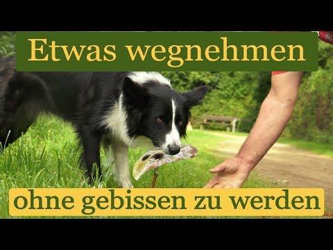 Dem Hund Etwas Aus Dem Maul Nehmen, Ohne Gebissen Zu Werden