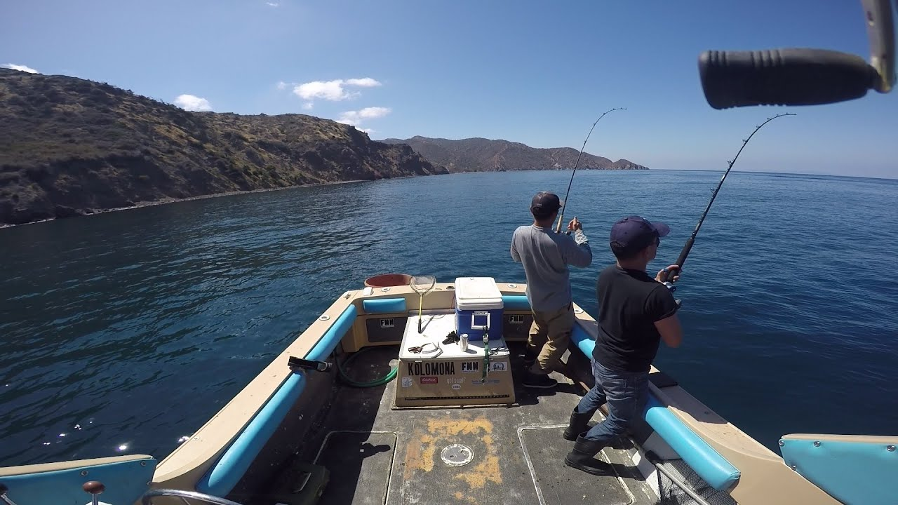 Rat attack small yellowtail at catalina island youtube for Catalina island fishing report