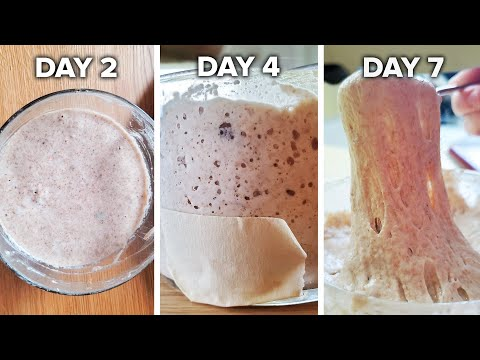 how-to-make-a-sourdough-starter-from-scratch-•-tasty