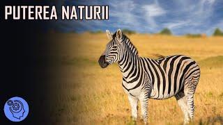 Lucruri Fascinante despre Animale