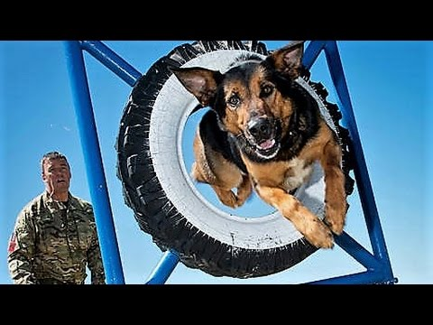 11-amazing-armed-forces-animals