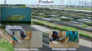 Arowana Ranch Corporate Profile Video Presentation (English)