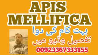 Explanation of Apis  Mellifica || Homeopathic Remedy || Learn Homeopathy