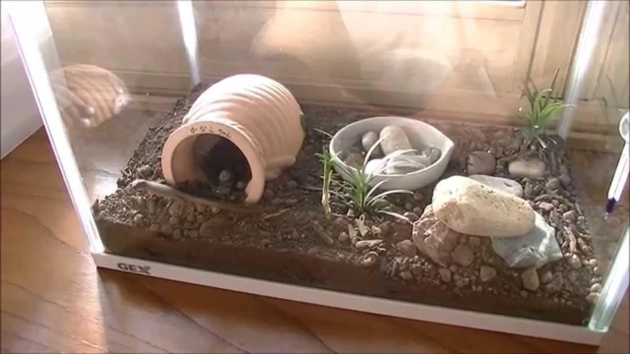 の 方 カナヘビ 育て